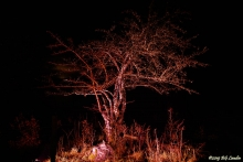 Belyst träd i Tomtebo (2018)